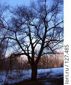 Купить «Ветвистое дерево», фото № 127485, снято 8 апреля 2007 г. (c) Бяков Вячеслав / Фотобанк Лори