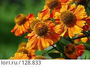 Купить «Цветы летом», фото № 128833, снято 1 сентября 2007 г. (c) Елена Бринюк / Фотобанк Лори