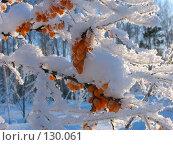 Облепиха под снегом. Стоковое фото, фотограф Serg Zastavkin / Фотобанк Лори