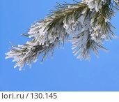 Купить «Ветвь в инее», фото № 130145, снято 25 марта 2005 г. (c) Serg Zastavkin / Фотобанк Лори