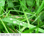 Капли дождя. Стоковое фото, фотограф Андреева Анастасия / Фотобанк Лори