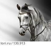 Купить «Портрет серого арабского жеребца», фото № 130913, снято 9 июня 2007 г. (c) Абрамова Ксения / Фотобанк Лори