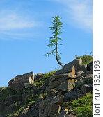 Купить «Плато Путорана. Одинокое дерево», фото № 132193, снято 15 июля 2004 г. (c) Serg Zastavkin / Фотобанк Лори