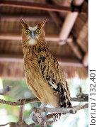 Купить «Портрет совы», фото № 132401, снято 23 октября 2007 г. (c) Морозова Татьяна / Фотобанк Лори