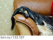 Купить «Собачий диван», фото № 133197, снято 14 ноября 2007 г. (c) Дмитрий Лемешко / Фотобанк Лори