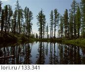 Озеро в лесу. Стоковое фото, фотограф Константин Газизов / Фотобанк Лори