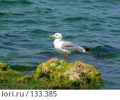 Купить «Черноморская чайка», фото № 133385, снято 22 июля 2007 г. (c) Тютькало Игорь / Фотобанк Лори