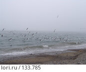 Множество чаек летает у берега моря. Стоковое фото, фотограф Николаенко Алексей / Фотобанк Лори