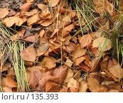 Купить «Осенняя листва», фото № 135393, снято 15 сентября 2007 г. (c) Кукуруза Михаил Петрович / Фотобанк Лори