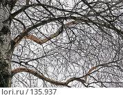 Купить «Зима. The winter.», фото № 135937, снято 2 декабря 2007 г. (c) Анатолий Теребенин / Фотобанк Лори