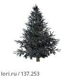 Купить «Рождественская ель», иллюстрация № 137253 (c) Бутинова Елена / Фотобанк Лори