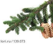 Купить «Ветка елки с шишками», фото № 139073, снято 30 октября 2007 г. (c) Иван / Фотобанк Лори