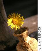 Купить «Похожий на солнце (желтый цветок гелиопсиса)», фото № 139545, снято 22 апреля 2018 г. (c) Светлана Кучинская / Фотобанк Лори