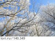 Купить «Кроны деревьев,покрытые инеем», фото № 140349, снято 5 декабря 2007 г. (c) Круглов Олег / Фотобанк Лори