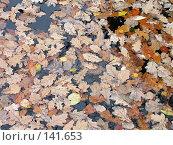 Купить «Осенние листья на воде», фото № 141653, снято 14 октября 2006 г. (c) Михаил Мозжухин / Фотобанк Лори