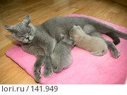 Купить «Кошка кормит котят», фото № 141949, снято 23 мая 2018 г. (c) Игорь Соколов / Фотобанк Лори