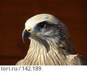Купить «Хищник», фото № 142189, снято 27 октября 2007 г. (c) Карелин Д.А. / Фотобанк Лори