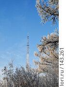 Купить «Телевышка -вид из зимнего парка», фото № 143261, снято 5 декабря 2007 г. (c) Круглов Олег / Фотобанк Лори