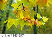 Купить «Разноцветная осень», фото № 143697, снято 27 октября 2007 г. (c) Сергей Старуш / Фотобанк Лори