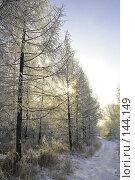 Купить «Сказочный лес», фото № 144149, снято 5 декабря 2007 г. (c) Круглов Олег / Фотобанк Лори