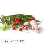 Купить «Две крысы прячутся», фото № 144821, снято 23 сентября 2007 г. (c) Иван / Фотобанк Лори