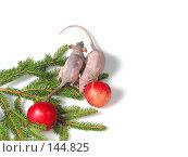 Купить «Крысы на страже», фото № 144825, снято 23 сентября 2007 г. (c) Иван / Фотобанк Лори