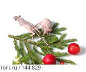 Купить «Крыса на старте встречи Деда Мороза», фото № 144829, снято 23 сентября 2007 г. (c) Иван / Фотобанк Лори