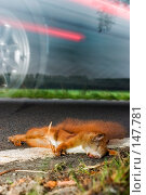 Купить «Скорость смерти», фото № 147781, снято 27 сентября 2004 г. (c) hunta / Фотобанк Лори