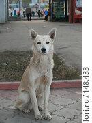 Купить «Бездомная собака смотрит с надеждой», фото № 148433, снято 1 ноября 2007 г. (c) Надежда Безрукова / Фотобанк Лори