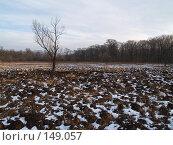 Купить «Зимнее болото, Приморье», фото № 149057, снято 13 декабря 2007 г. (c) Олег Рубик / Фотобанк Лори
