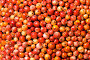 Спелые ягоды, фото № 150901, снято 4 августа 2007 г. (c) chaoss / Фотобанк Лори