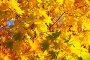 Осенние листья, фото № 152009, снято 1 октября 2007 г. (c) chaoss / Фотобанк Лори