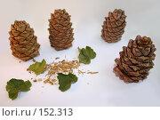 Купить «Кедровые шишки и листья смородины на белом фоне», фото № 152313, снято 24 ноября 2007 г. (c) Юлия Паршина / Фотобанк Лори
