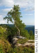 Купить «Дерево на краю обрыва. Плато Лаго-Наки. Кавказский заповедник», фото № 152481, снято 10 августа 2007 г. (c) Петухов Геннадий / Фотобанк Лори
