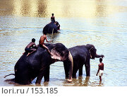 Купить «Купание слонов», эксклюзивное фото № 153185, снято 17 августа 2018 г. (c) Free Wind / Фотобанк Лори