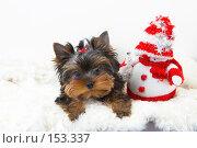 Купить «Щенок йоркширского терьера  рядом со снеговиком», фото № 153337, снято 23 сентября 2007 г. (c) Ирина Мойсеева / Фотобанк Лори