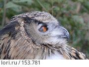 Купить «Голова совы в профиль», фото № 153781, снято 23 сентября 2007 г. (c) Иван Мацкевич / Фотобанк Лори