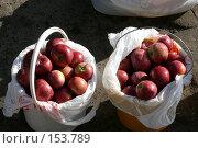 Купить «Красные яблоки в ведрах», фото № 153789, снято 1 октября 2007 г. (c) Иван Мацкевич / Фотобанк Лори
