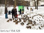 Купить «Люди и утки», фото № 154129, снято 16 декабря 2007 г. (c) Сергей Лаврентьев / Фотобанк Лори