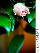 Купить «Роза в букете», фото № 154649, снято 22 августа 2007 г. (c) Кирилл Николаев / Фотобанк Лори
