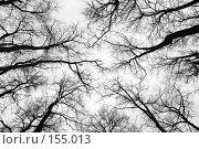Купить «Взгляд вверх», фото № 155013, снято 16 декабря 2007 г. (c) Сергей Лаврентьев / Фотобанк Лори
