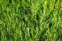 Трава в росе, фото № 155525, снято 15 сентября 2007 г. (c) Максим Горпенюк / Фотобанк Лори