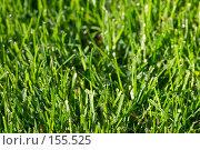 Купить «Трава в росе», фото № 155525, снято 15 сентября 2007 г. (c) Максим Горпенюк / Фотобанк Лори