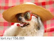 Купить «Смешная собака», фото № 156001, снято 24 августа 2019 г. (c) OSHI / Фотобанк Лори