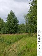 Купить «Тропаревский лесопарк», фото № 156825, снято 8 июля 2007 г. (c) Петухов Геннадий / Фотобанк Лори