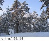 Купить «Зимний лес», фото № 159161, снято 6 февраля 2006 г. (c) Карелин Д.А. / Фотобанк Лори
