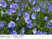 Купить «Полевые цветы», фото № 159277, снято 15 июня 2006 г. (c) Морозова Татьяна / Фотобанк Лори
