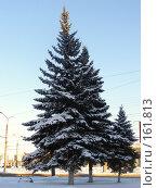 Купить «Ель в городе», фото № 161813, снято 11 февраля 2007 г. (c) Дмитрий Никитин / Фотобанк Лори