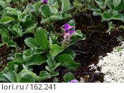 Купить «Травяной цветущий покров после дождя», фото № 162241, снято 26 июня 2007 г. (c) Николай Коржов / Фотобанк Лори