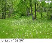 Купить «Поляна одуванчиков», фото № 162561, снято 14 мая 2006 г. (c) Igor Pavlenko / Фотобанк Лори
